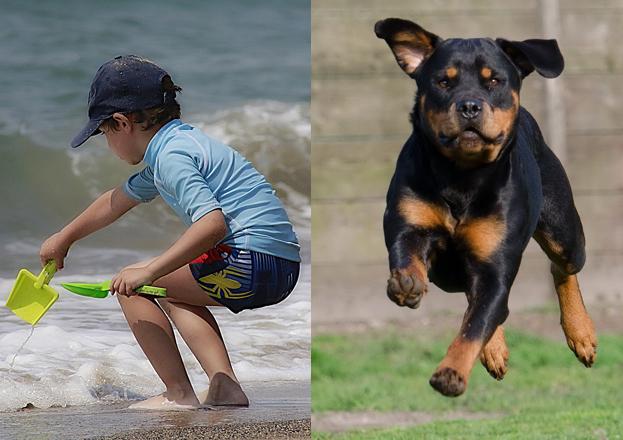 Rottweiler należący do Niemki pogryzł 8-latka na plaży w Świnoujściu!