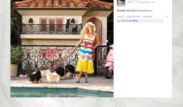 Tak mieszkają psy Paris Hilton