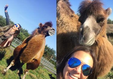 Kinga Rusin robi selfie z wielbłądem...