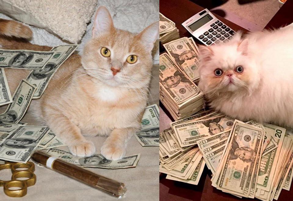 Koty, które pozują z pieniędzmi