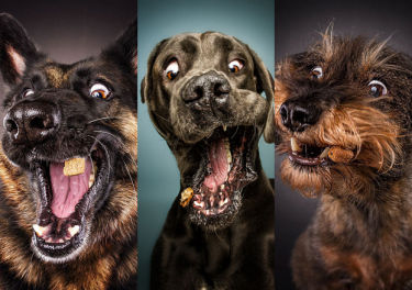 Miny psów łapiących chrupki... (ZDJĘCIA)